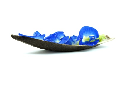 Boat of blue flowers isolated on White background photo