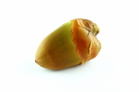 Young coconut fruit on white background. Stock Photo - 10227427