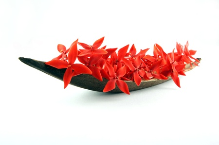 Boat of red flowers isolated on White background. Stock Photo - 10201750