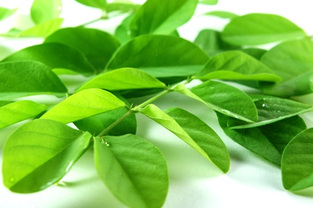 randomly: Green leaves randomly scattered on white background. Stock Photo