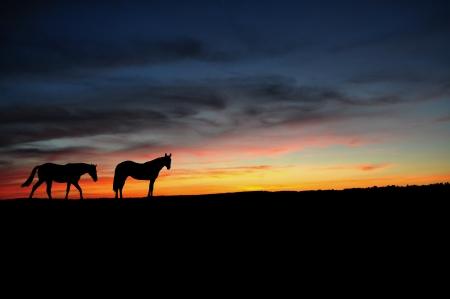 graze: Horses walking in the sunset