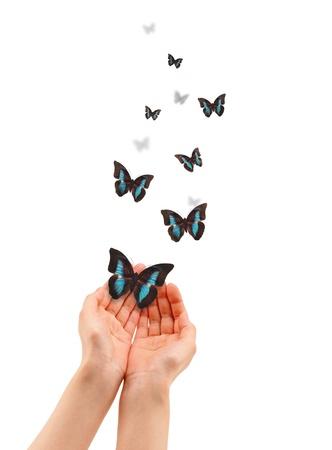butterflies flying: Mani in possesso di una farfalla isolato su sfondo bianco.