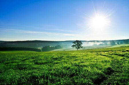 Field with fog and blue sky in the morning.