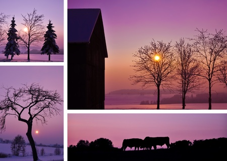 Winter landscape collage with four different fotos.  Stock Photo - 12253130