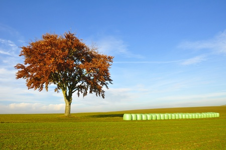 Tree and hay bales in a green field.