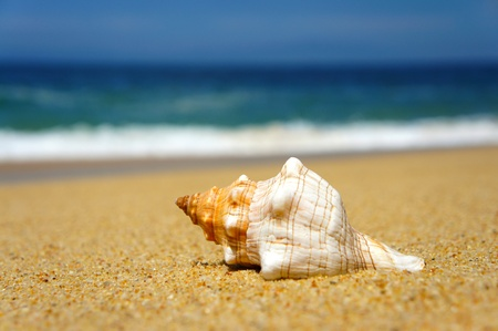 Seashell laying on a tropical beach with blue waves in the background.  photo