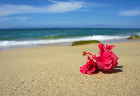 Pink tropical flower laying on a tropical beach. photo