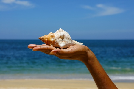 Female hand holding a seashell on a tropical beach with blue water in the background. photo