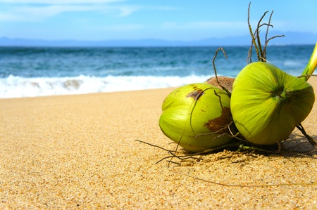 Two Gree Coconuts laying on a tropical beach photo