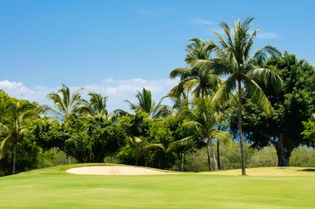 Golf course surrounded by palm trees in Puerto Vallarta, Mexico.  photo