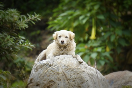dog rock: A dog laying lazy on top of a rock.