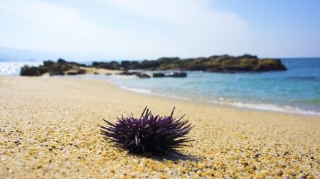 seastar: Closup of a purple seastar lying on the beach. Stock Photo