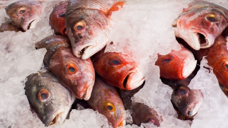 gills: Closeup of Red Snappers lying on ice in a fish market. Stock Photo
