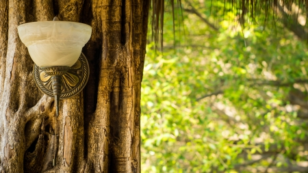 A vintage lamp outside on a tree stump Stock Photo - 23479006