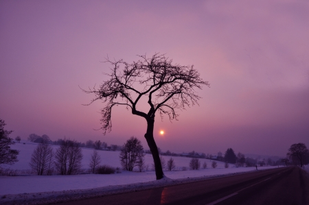 A tree near the road on a cold winters night.  Stock Photo - 23477170