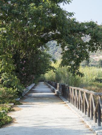 Tree Covered Walkway