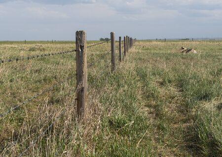 Barbed wire fence bordering farm property in the prairies wild grass of alberta 版權商用圖片