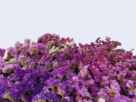 Purple and white statice flowers in basket isolated on white background