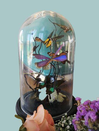 Beautiful butterflies in a glass jar as a home decor Stock Photo