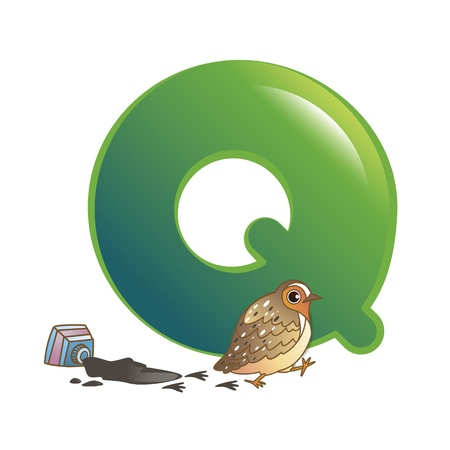 illustration of isolated animal alphabet Q with quail on white
