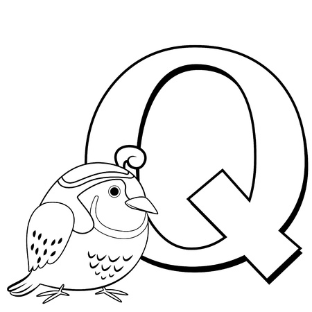Coloring Alphabet for Kids, Q with quail Vector