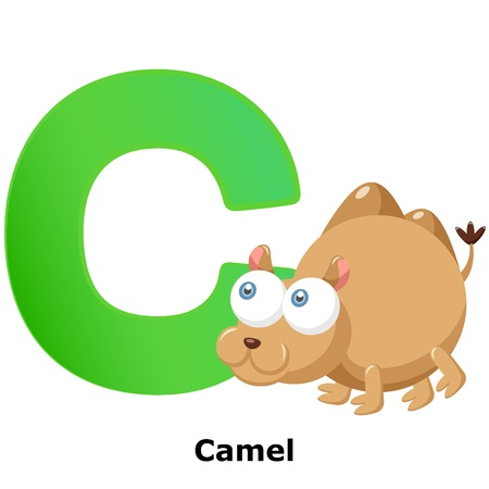 illustration of isolated animal alphabet C with camel on white Stock Vector - 20457800