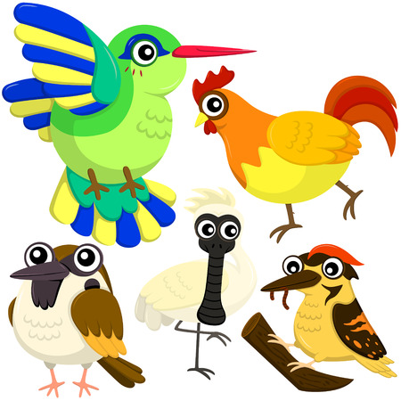 faced: five colorful cute birds with white background