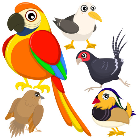 collections: five colorful cute birds with white background