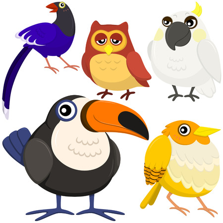 five colorful cute birds with white background Vector