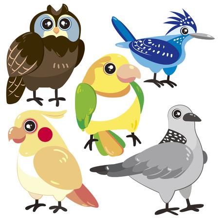 pigeon owl: five cute birds set on white background  Illustration