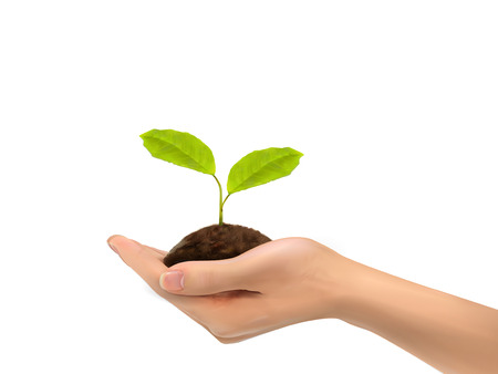 hands holding plant: realistic hand holding plant isolated on white background