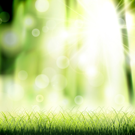 agriculture wallpaper: close-up look at natural grass background with sunshine