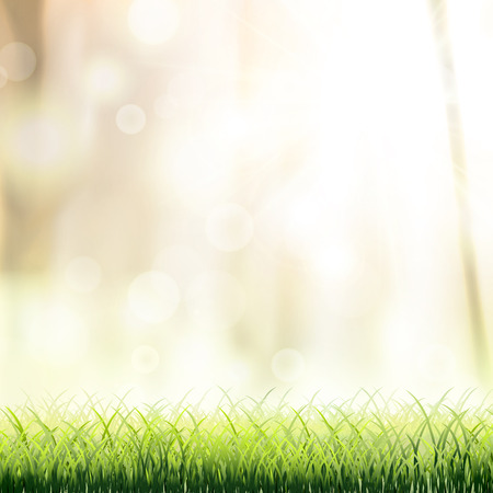 close-up look at natural grass background with sunshine