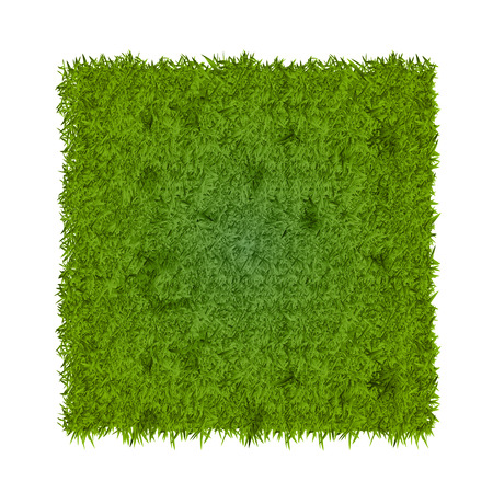 close-up look at fresh green grass background texture
