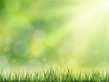 outdoors: close-up look at natural grass background with sunshine