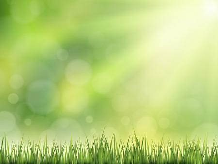 sol radiante: close-up mira en el fondo de hierba natural con sol