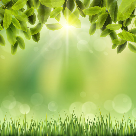 close-up look at natural grass background with sunshine and leaves Illustration