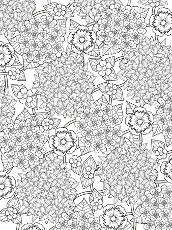 exquisite: lovely hydrangea coloring page in exquisite line Illustration