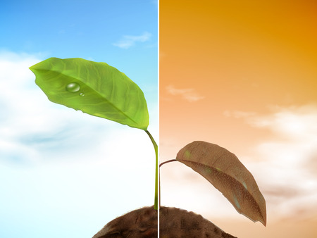 seedling growing: comparison of seedling 3D illustration - well growing and drooping seedling