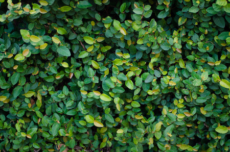 Beautiful leaves background, close up look of wild plants Stock Photo