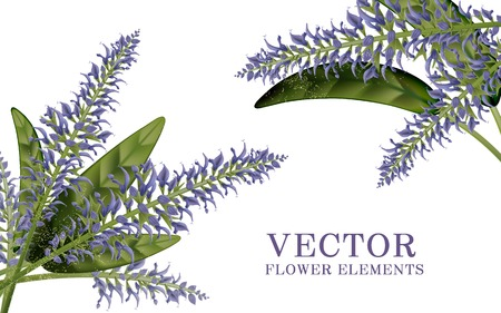 salvia: Elegant salvia elements, 3d illustration floral elements isolated on white background