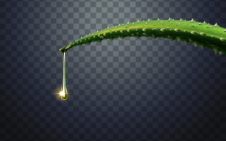 green aloe vera plant element, with one water drop fall from the tip, 3d illustration