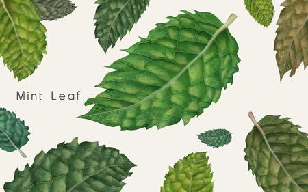 다양 한 종류의 민트 잎, 흰색 배경 3d 그림 스톡 콘텐츠 - 75805200