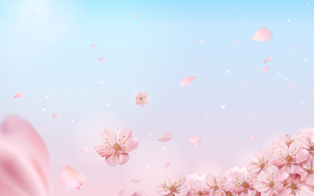 Romantic cherry blossom background, flying flowers isolated on pink and blue background in 3d illustration