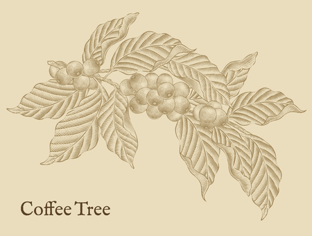 Coffee tree elements, retro coffee plants in etching shading style