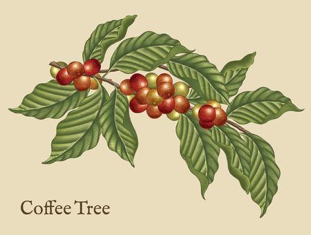 Éléments de caféier, plants de café rétro dans un style d'ombrage de gravure avec couleur Vecteurs