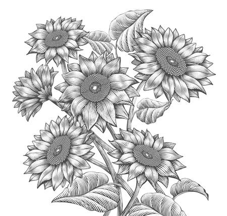 Elementi retrò di girasole, girasoli attraenti in stile ombreggiatura incisa, tonalità in bianco e nero Vettoriali