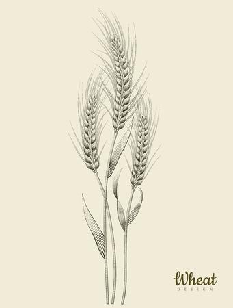 レトロな小麦耳ベクトルイラスト