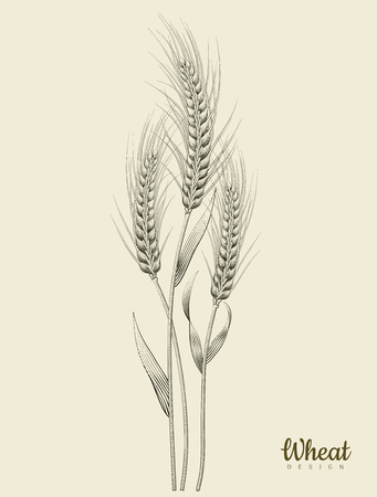 Retro wheat ear vector illustration Ilustracja