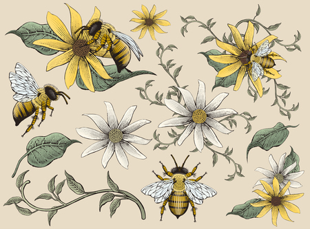 Honey bees and flowers elements vector illustration
